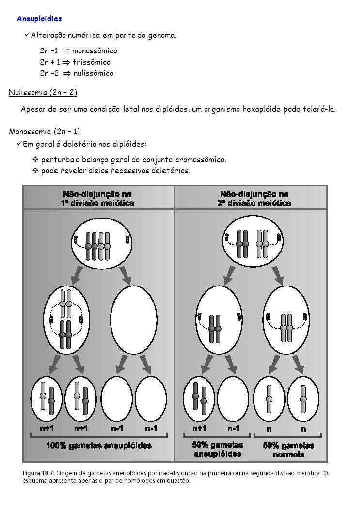 Aneuploidias Alteração numérica em parte do genoma. 2n –1  monossômico. 2n + 1  trissômico. 2n –2  nulissômico.