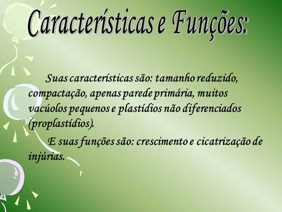 Características e Funções: