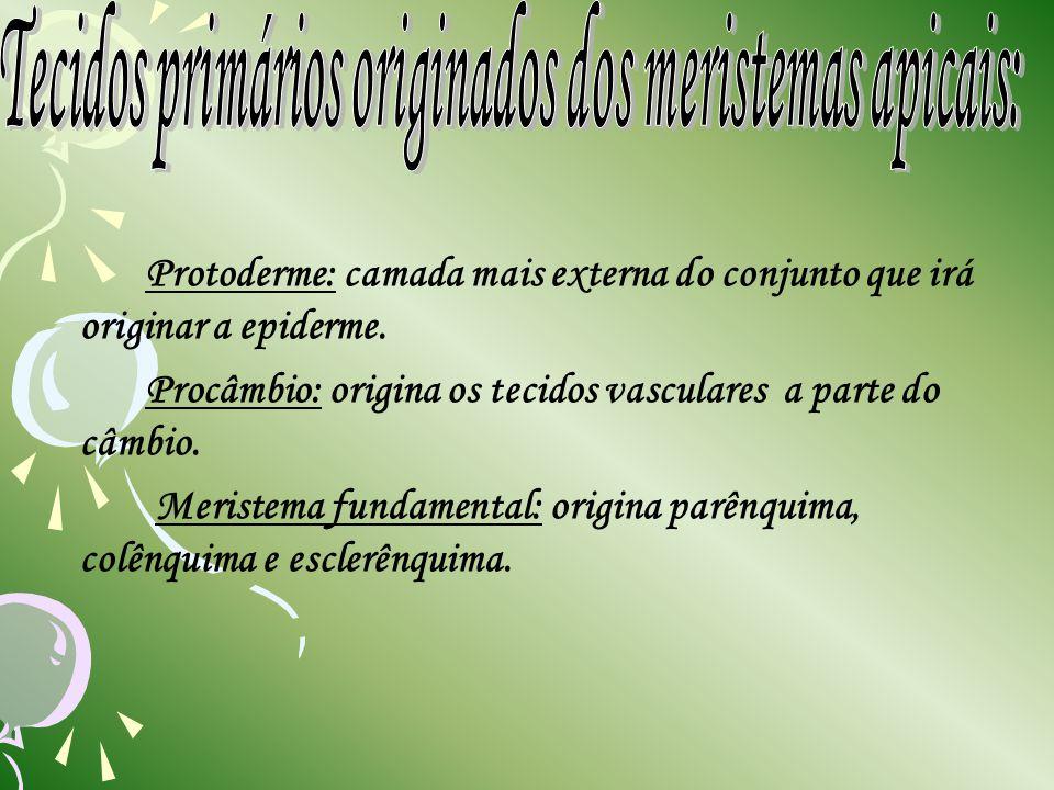 Tecidos primários originados dos meristemas apicais: