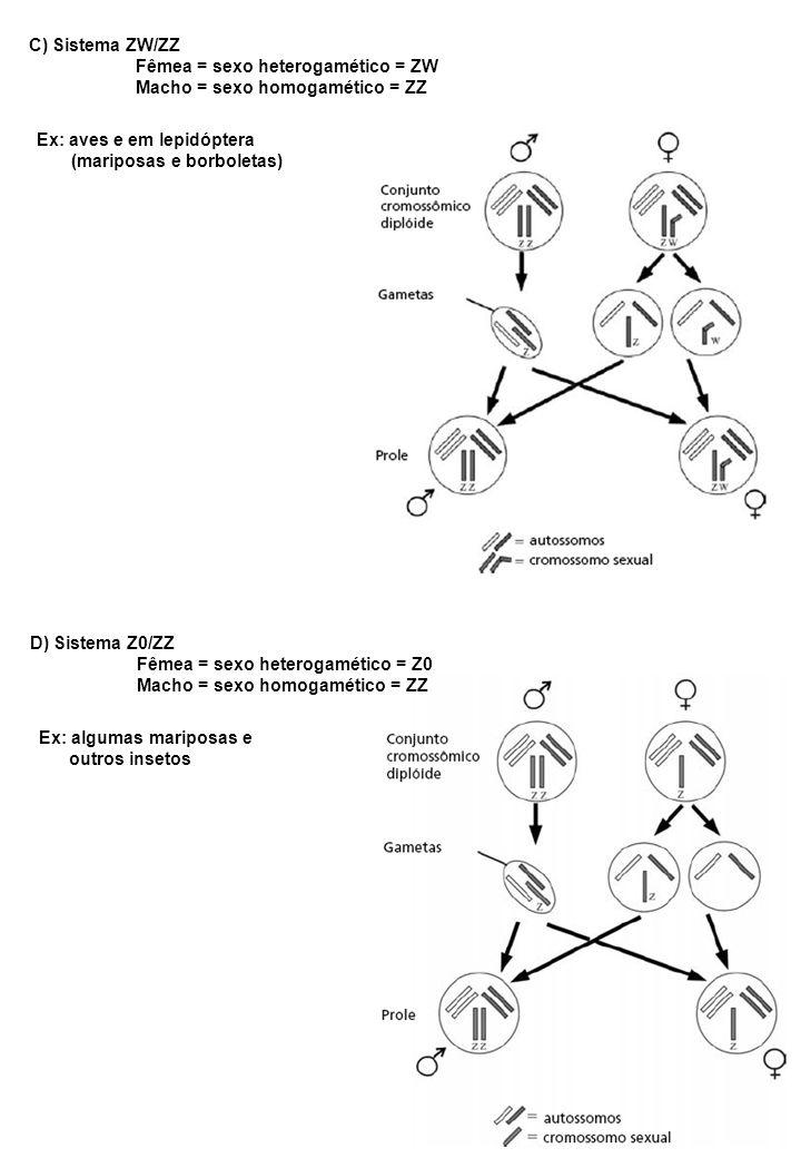 C) Sistema ZW/ZZ Fêmea = sexo heterogamético = ZW. Macho = sexo homogamético = ZZ. Ex: aves e em lepidóptera.