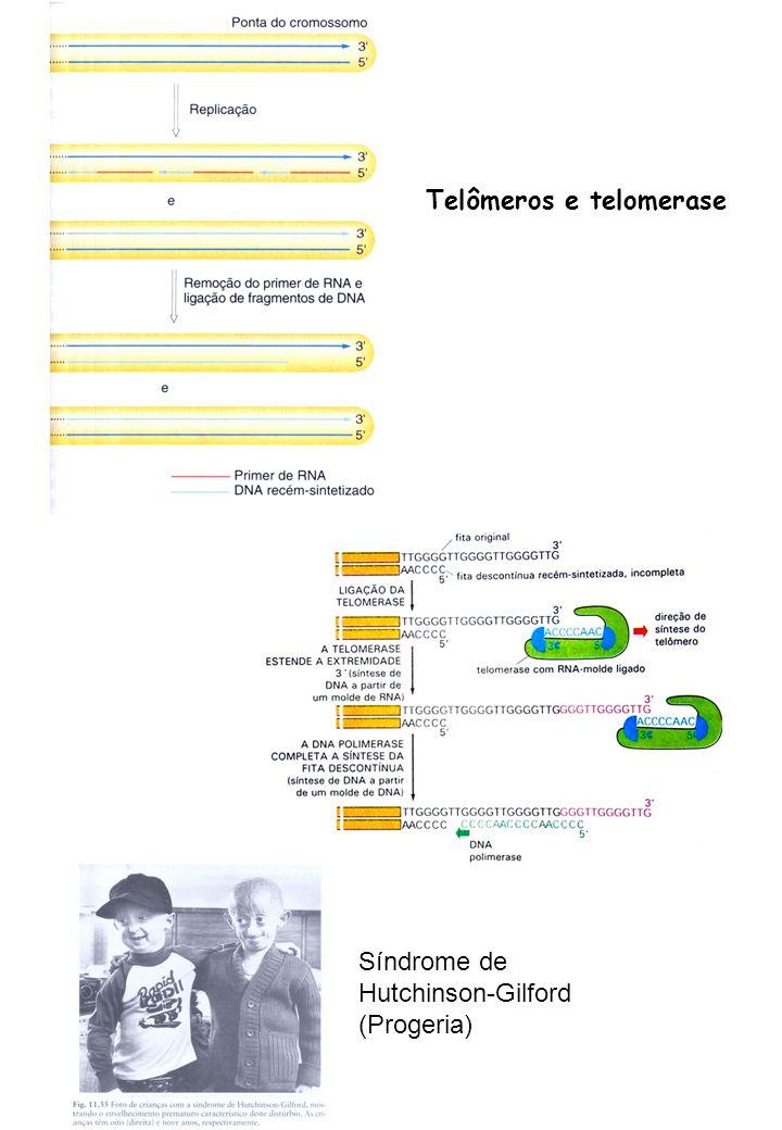 Telômeros e telomerase