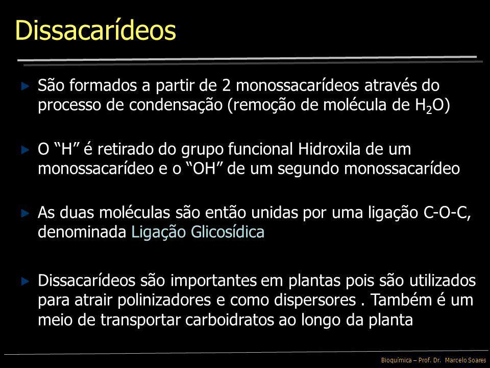 Dissacarídeos São formados a partir de 2 monossacarídeos através do processo de condensação (remoção de molécula de H2O)