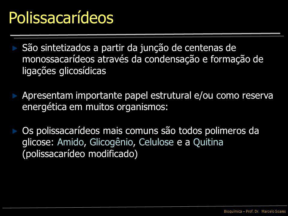 Polissacarídeos São sintetizados a partir da junção de centenas de monossacarídeos através da condensação e formação de ligações glicosídicas.