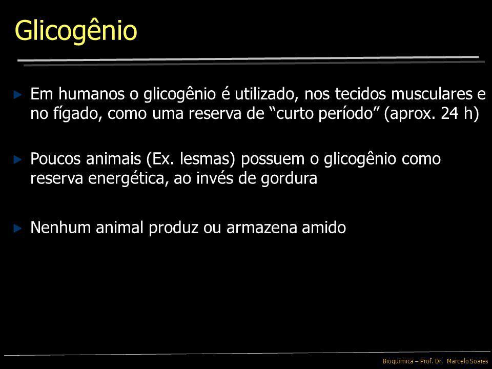 Glicogênio Em humanos o glicogênio é utilizado, nos tecidos musculares e no fígado, como uma reserva de curto período (aprox. 24 h)