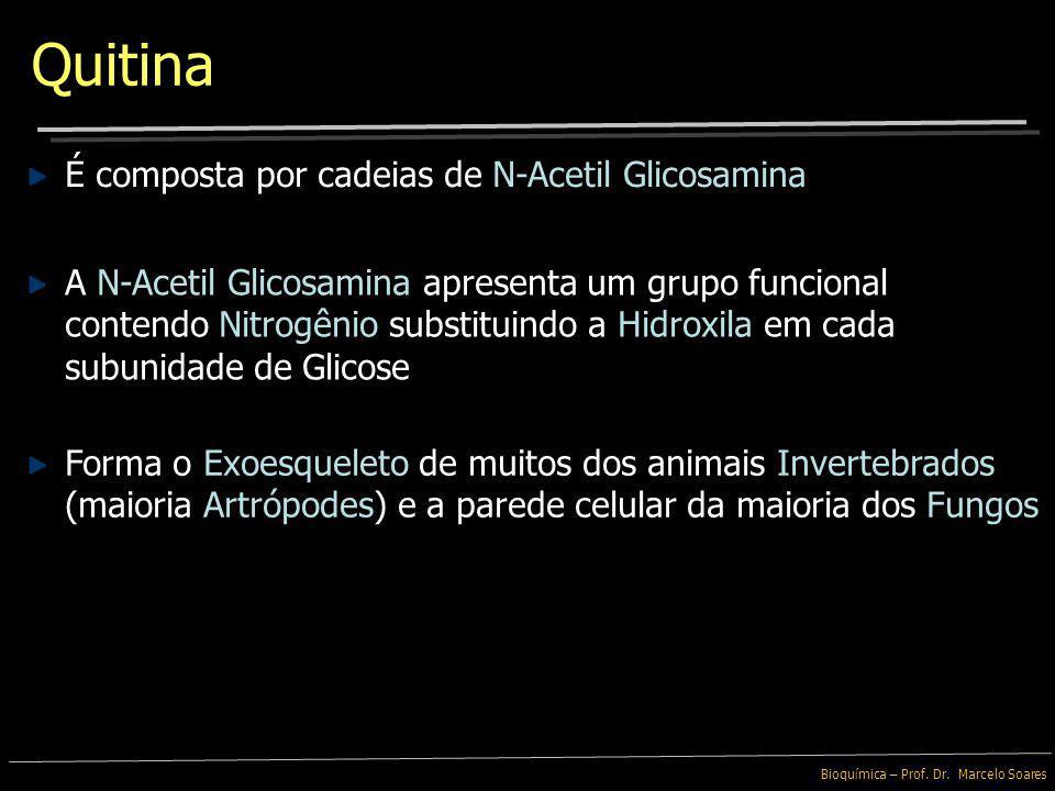 Quitina É composta por cadeias de N-Acetil Glicosamina