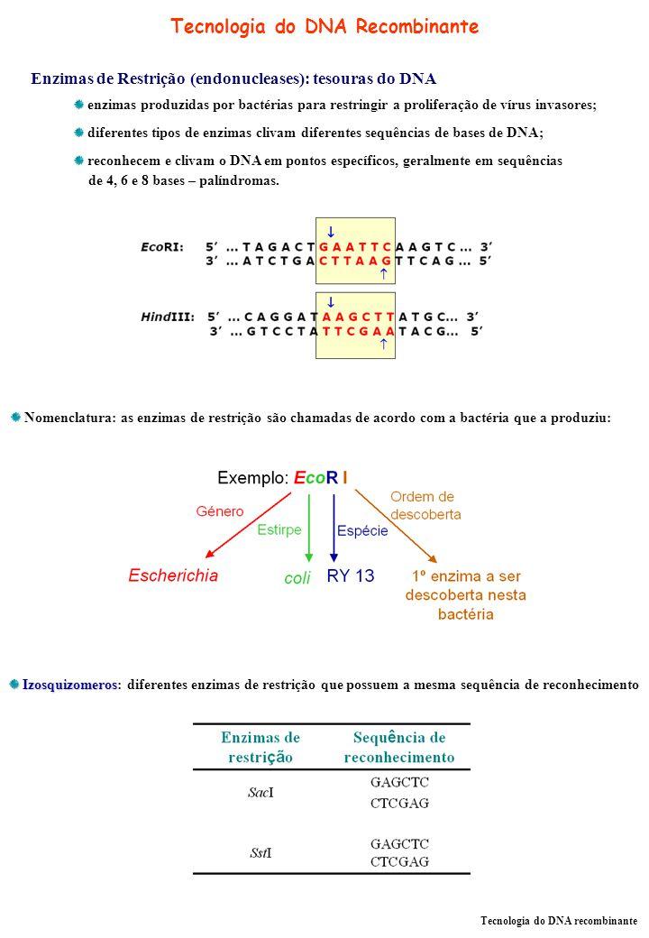 Tecnologia do DNA Recombinante Tecnologia do DNA recombinante