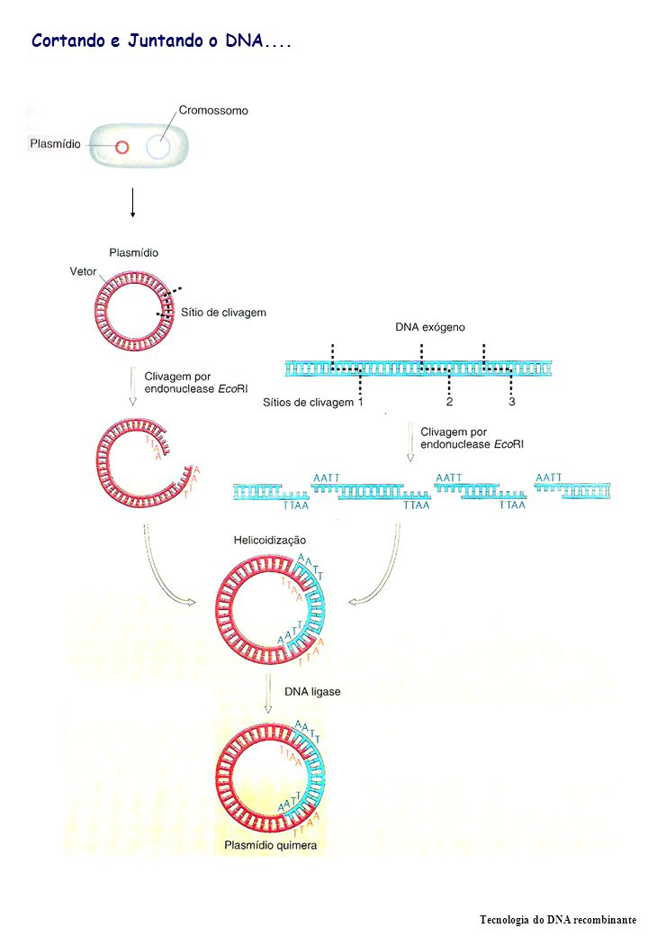 Tecnologia do DNA recombinante