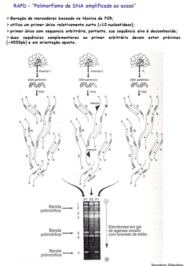 RAPD – Polimorfismo de DNA amplificado ao acaso