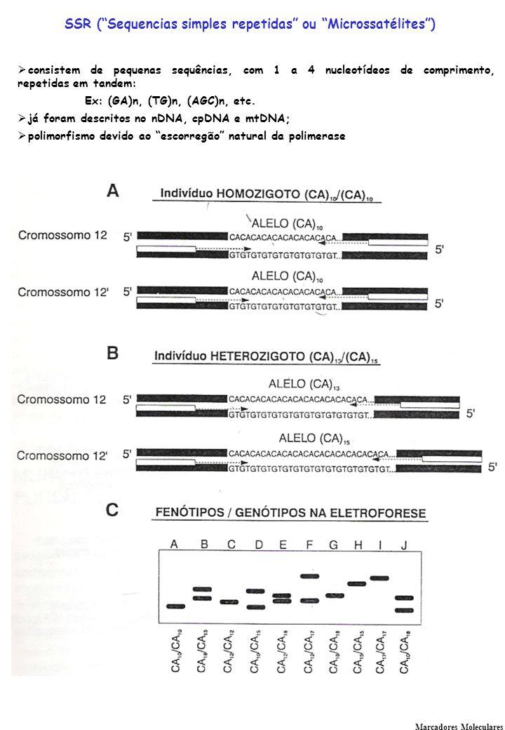 SSR ( Sequencias simples repetidas ou Microssatélites )