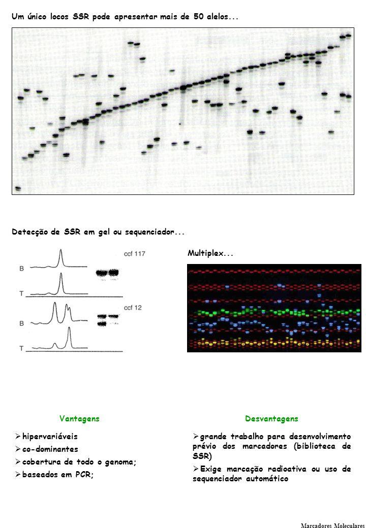 Um único locos SSR pode apresentar mais de 50 alelos...