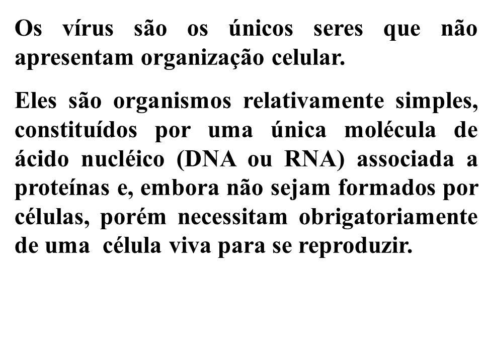 Os vírus são os únicos seres que não apresentam organização celular.