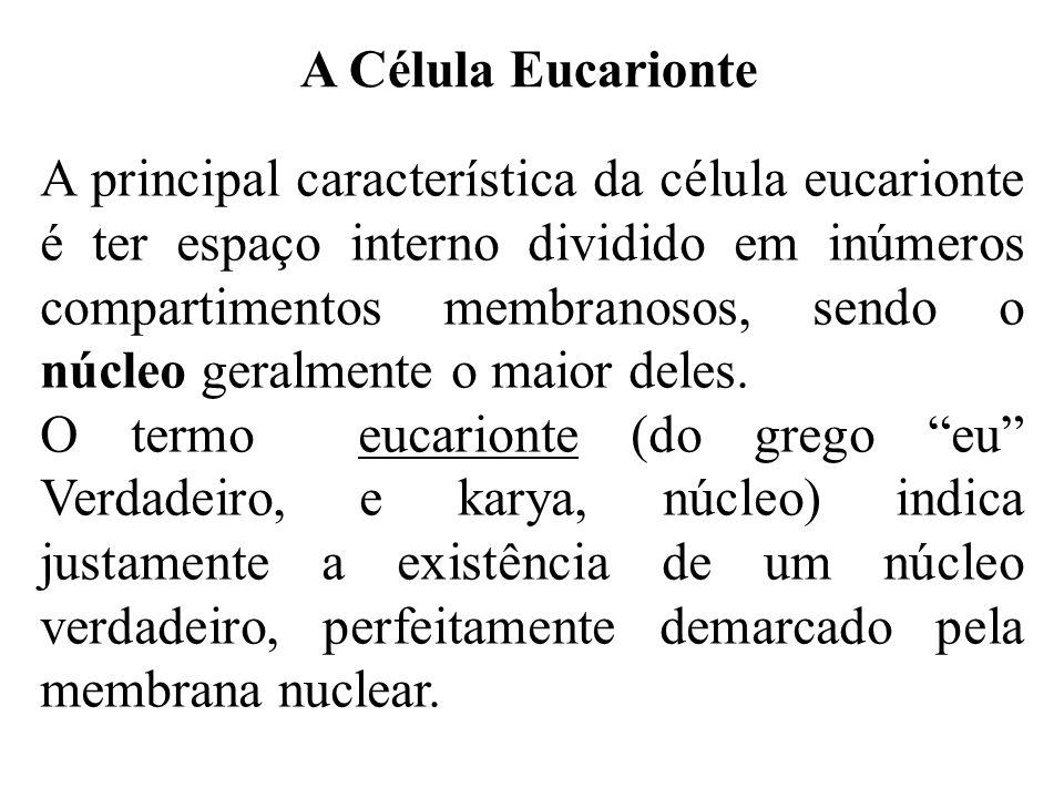 A Célula Eucarionte