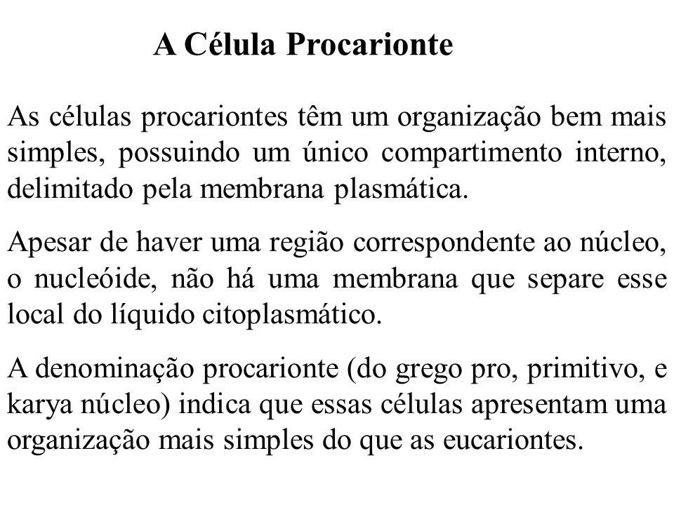 A Célula Procarionte