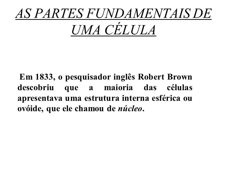 AS PARTES FUNDAMENTAIS DE UMA CÉLULA