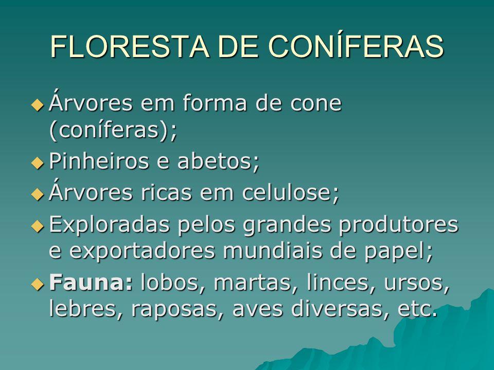 FLORESTA DE CONÍFERAS Árvores em forma de cone (coníferas);