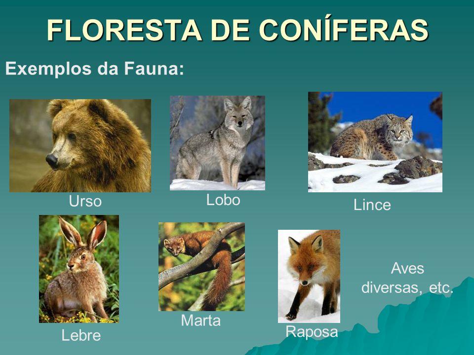 FLORESTA DE CONÍFERAS Exemplos da Fauna: Urso Lobo Lince