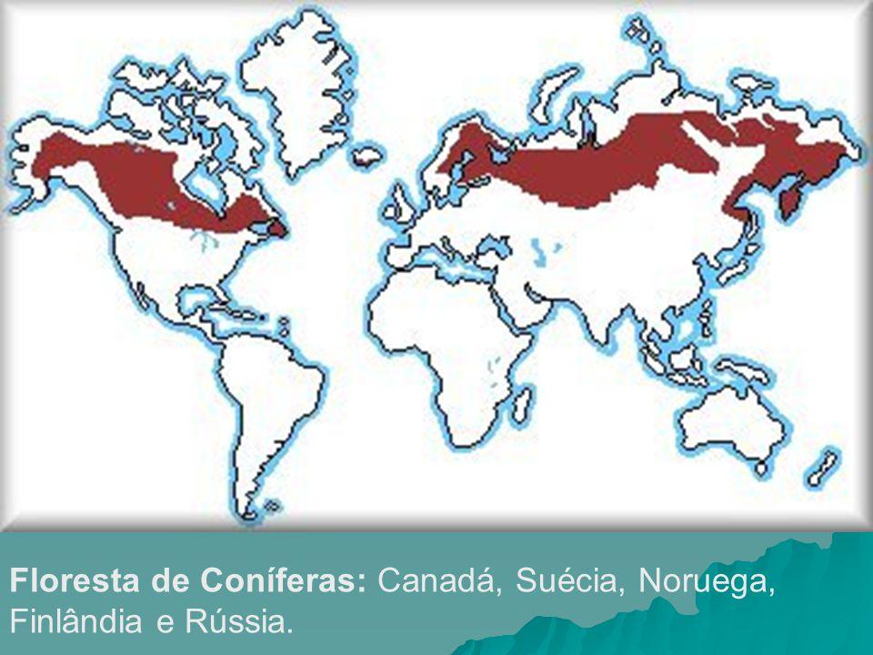 Floresta de Coníferas: Canadá, Suécia, Noruega, Finlândia e Rússia.