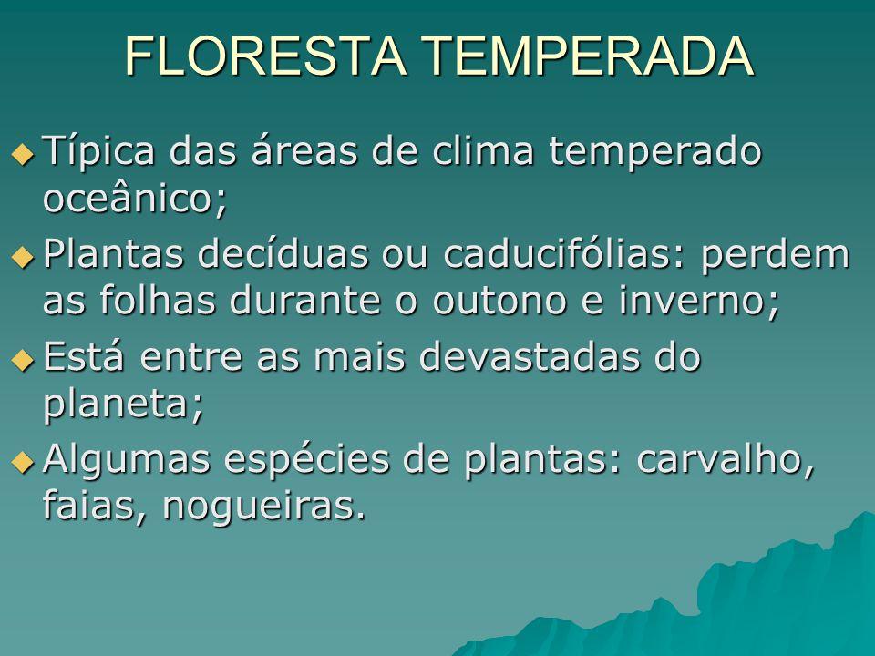 FLORESTA TEMPERADA Típica das áreas de clima temperado oceânico;