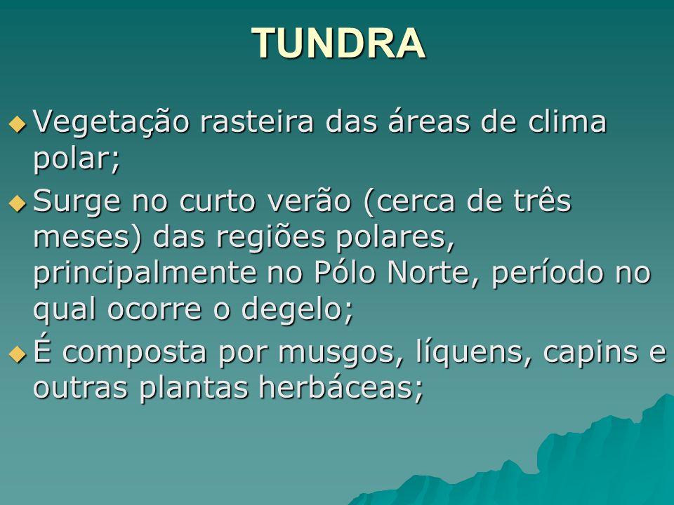 TUNDRA Vegetação rasteira das áreas de clima polar;