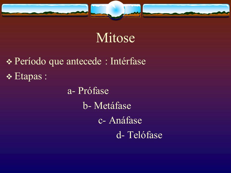 Mitose Período que antecede : Intérfase Etapas : a- Prófase