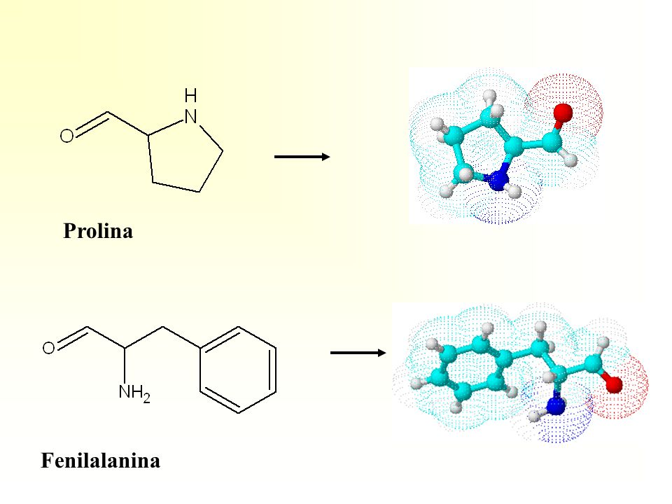 Prolina Fenilalanina