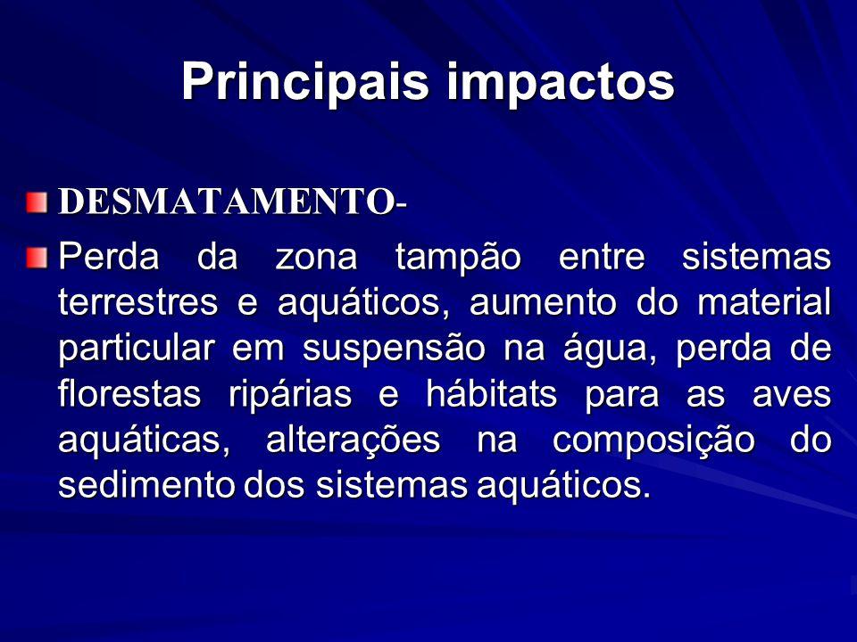 Principais impactos DESMATAMENTO-