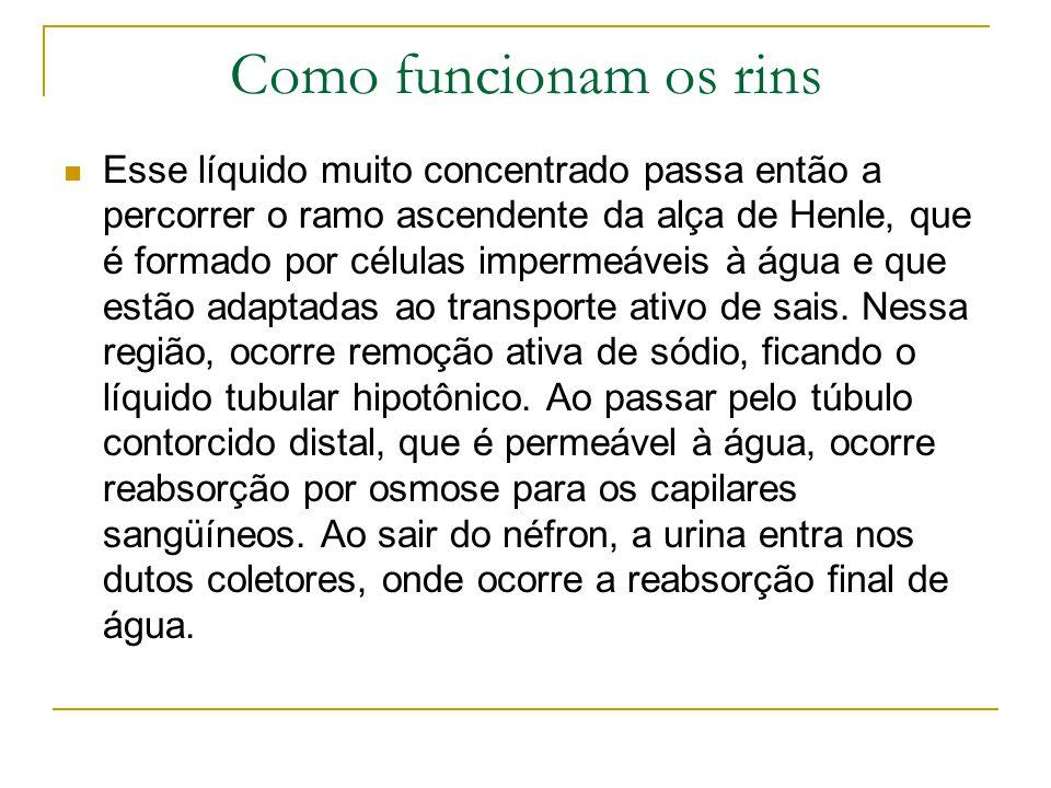 Como funcionam os rins