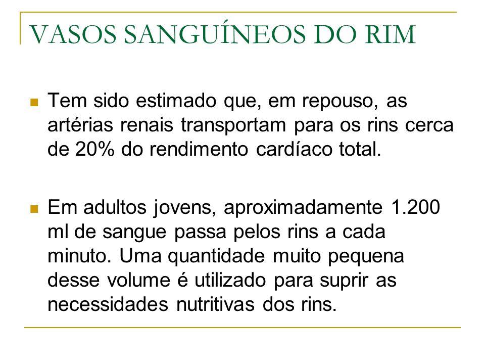 VASOS SANGUÍNEOS DO RIM