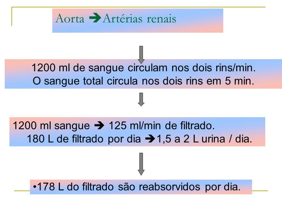 Aorta Artérias renais