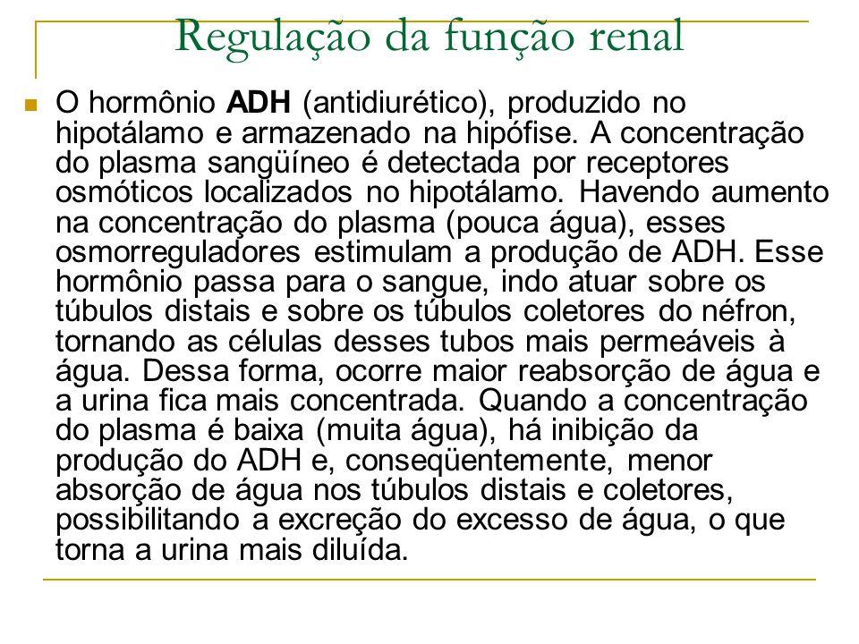 Regulação da função renal