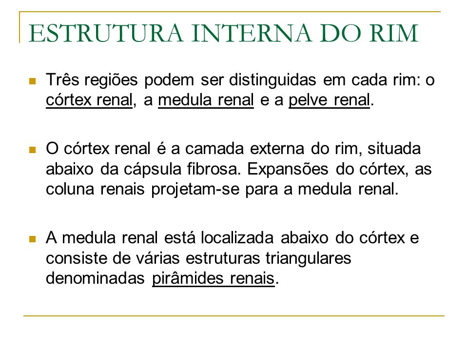 ESTRUTURA INTERNA DO RIM