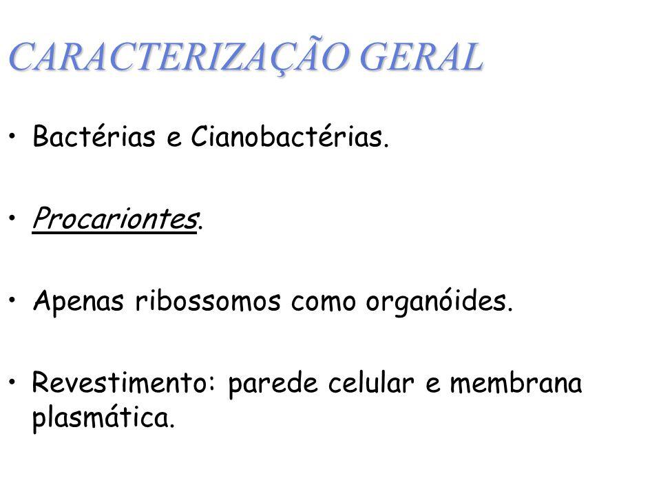 CARACTERIZAÇÃO GERAL Bactérias e Cianobactérias. Procariontes.