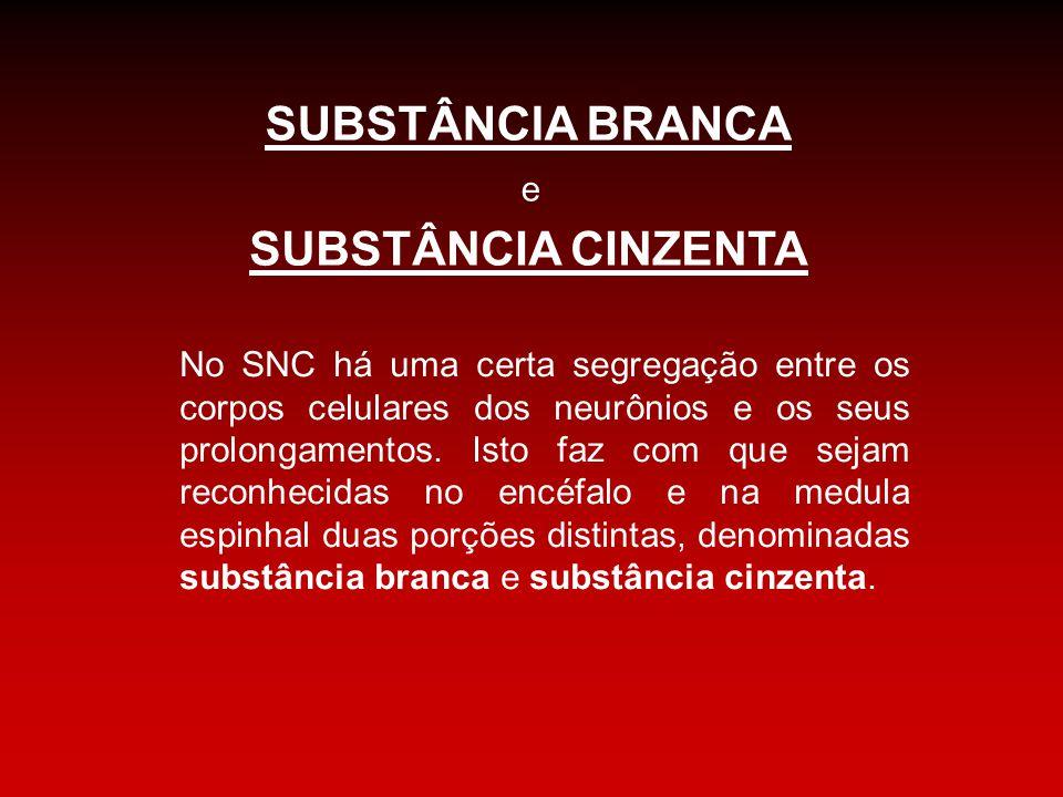 SUBSTÂNCIA BRANCA SUBSTÂNCIA CINZENTA e