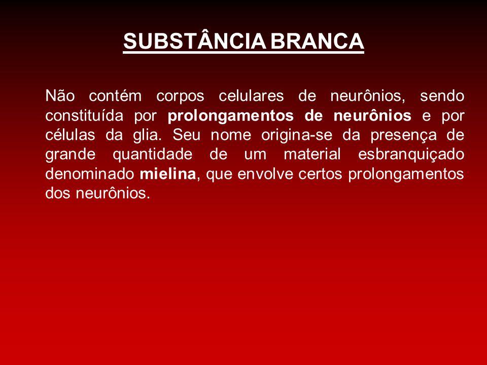 SUBSTÂNCIA BRANCA