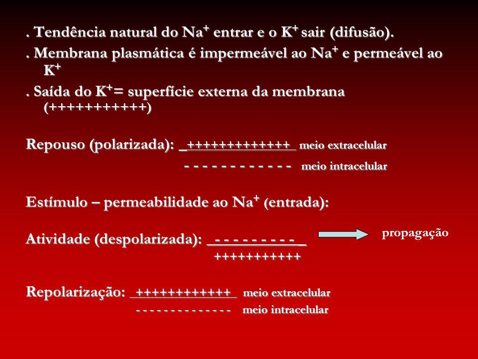 . Tendência natural do Na+ entrar e o K+ sair (difusão).