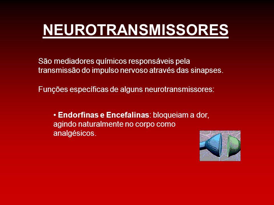 NEUROTRANSMISSORES São mediadores químicos responsáveis pela transmissão do impulso nervoso através das sinapses.
