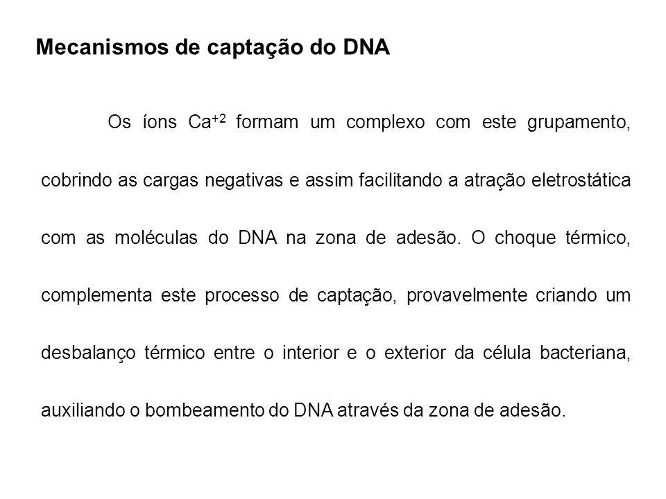 Mecanismos de captação do DNA