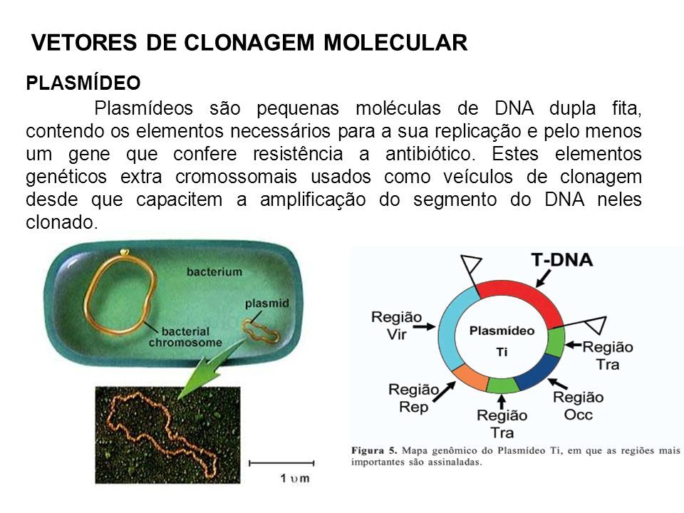 VETORES DE CLONAGEM MOLECULAR