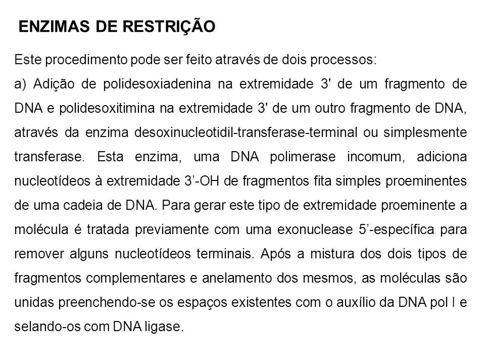 ENZIMAS DE RESTRIÇÃO Este procedimento pode ser feito através de dois processos: