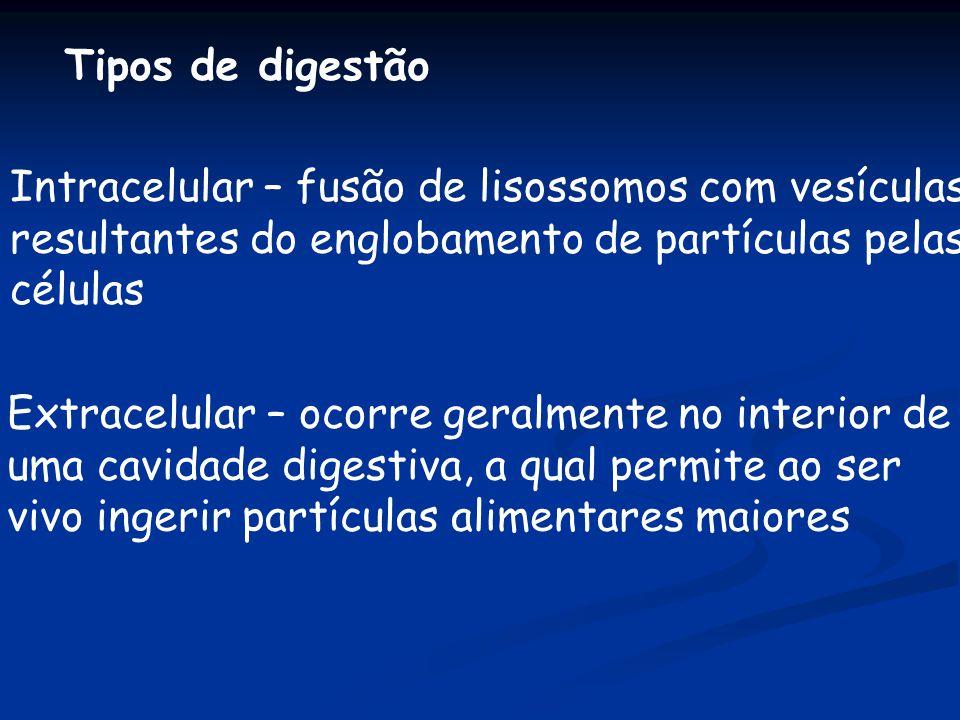 Tipos de digestão Intracelular – fusão de lisossomos com vesículas. resultantes do englobamento de partículas pelas.