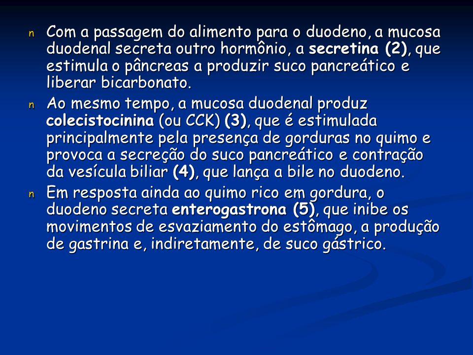 Com a passagem do alimento para o duodeno, a mucosa duodenal secreta outro hormônio, a secretina (2), que estimula o pâncreas a produzir suco pancreático e liberar bicarbonato.