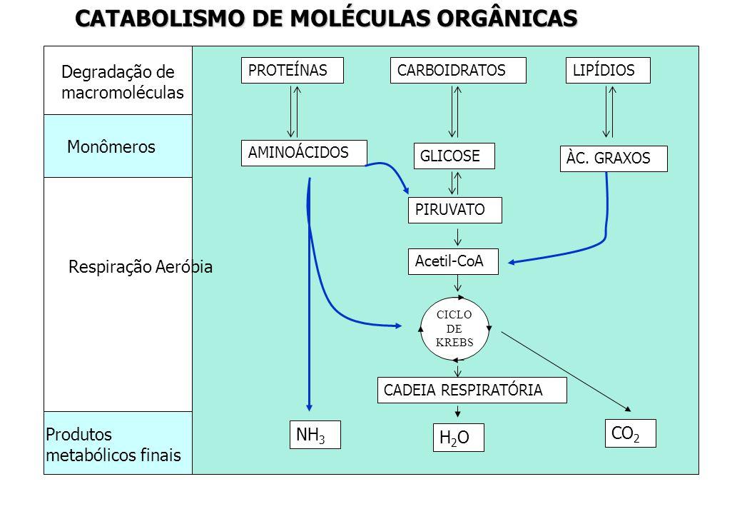 CATABOLISMO DE MOLÉCULAS ORGÂNICAS
