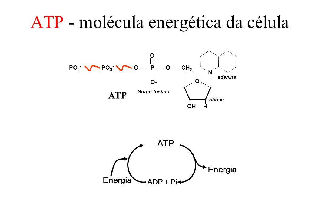 ATP - molécula energética da célula