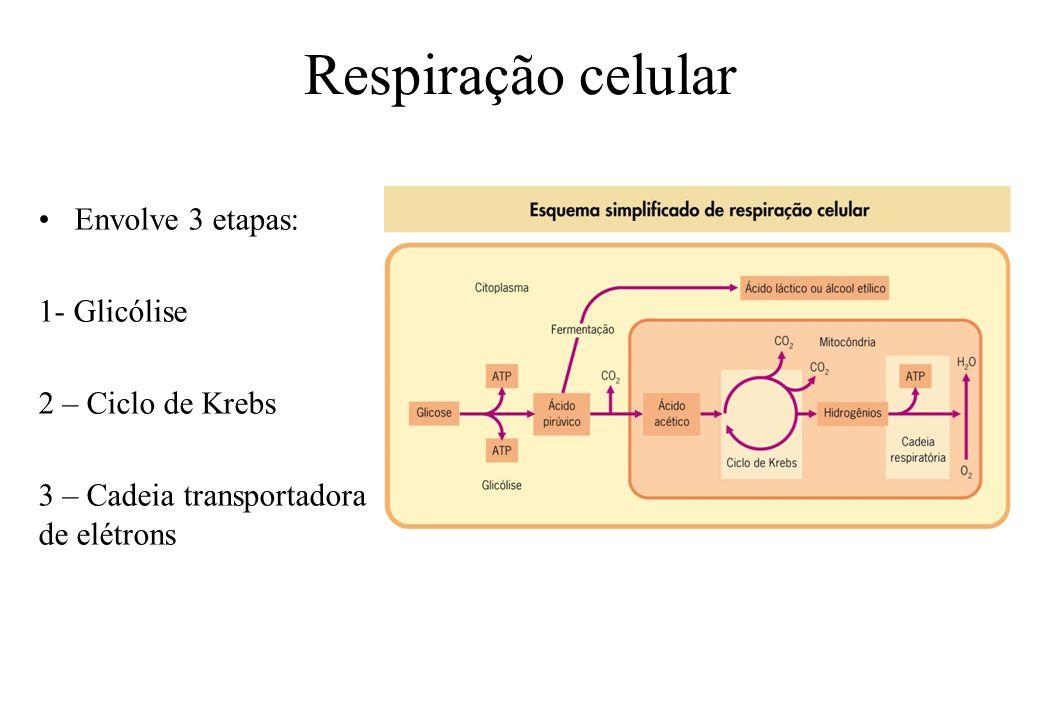 Respiração celular Envolve 3 etapas: 1- Glicólise 2 – Ciclo de Krebs