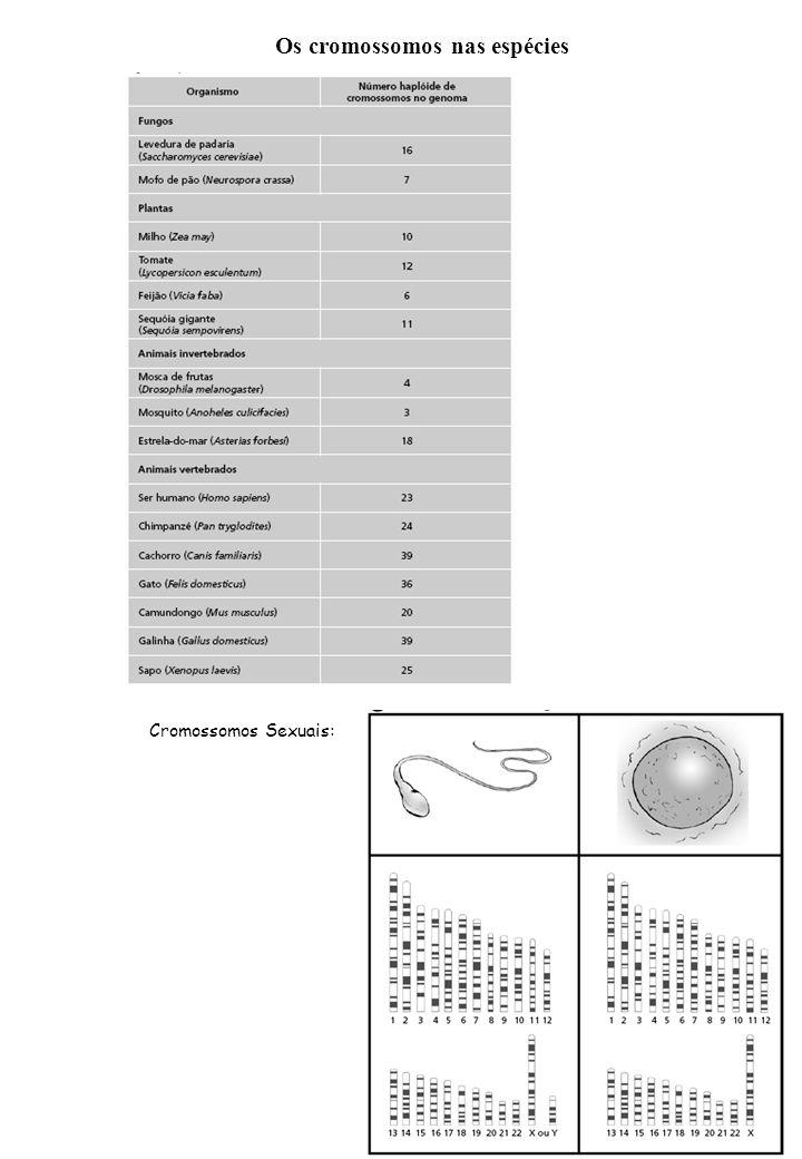 Os cromossomos nas espécies