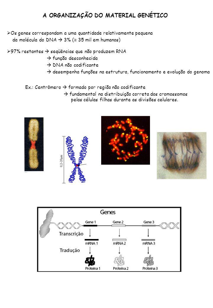 A ORGANIZAÇÃO DO MATERIAL GENÉTICO