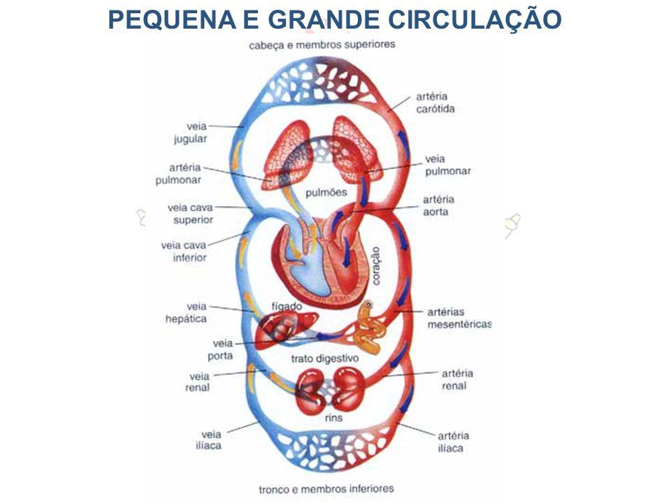 PEQUENA E GRANDE CIRCULAÇÃO