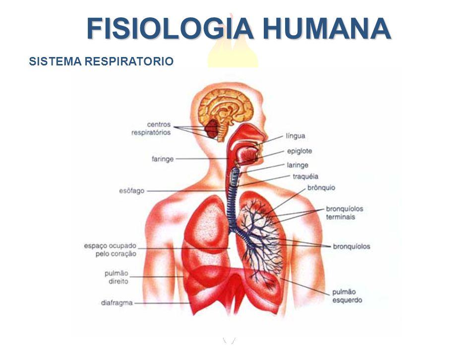 FISIOLOGIA HUMANA SISTEMA RESPIRATORIO