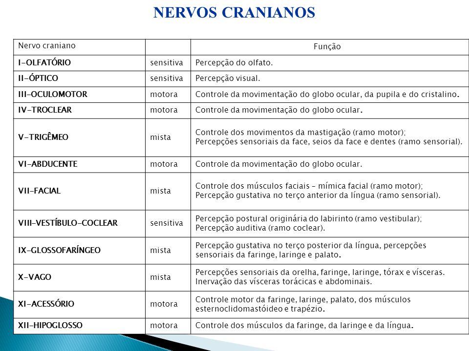 NERVOS CRANIANOS 14 Nervo craniano Função I-OLFATÓRIO sensitiva