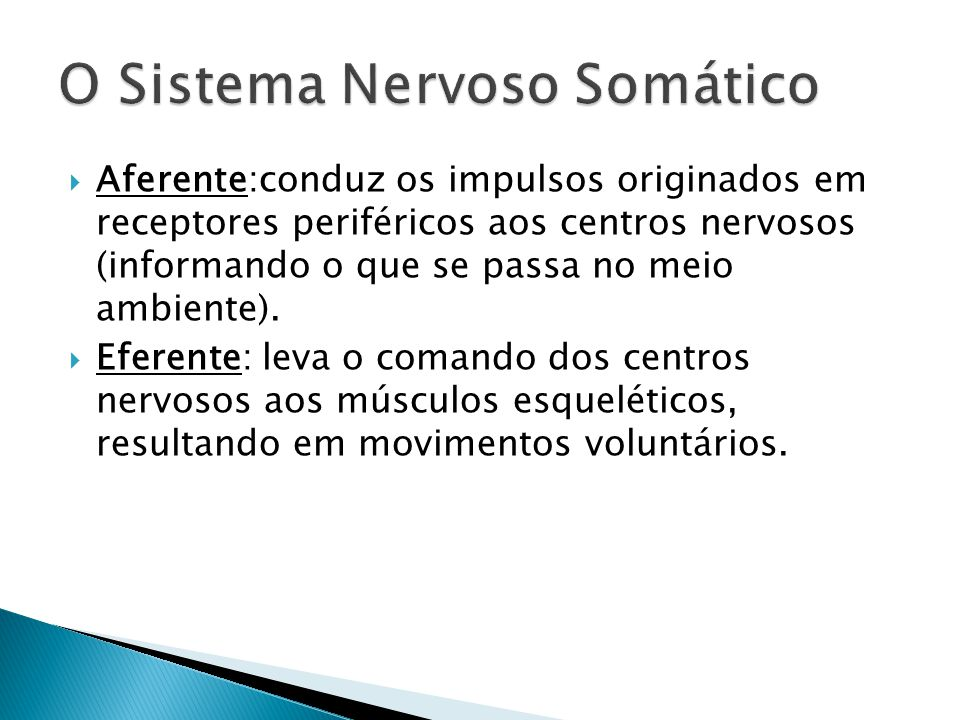 O Sistema Nervoso Somático
